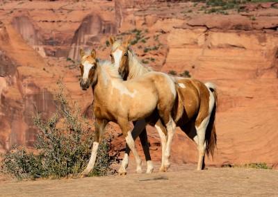 Horses1_high