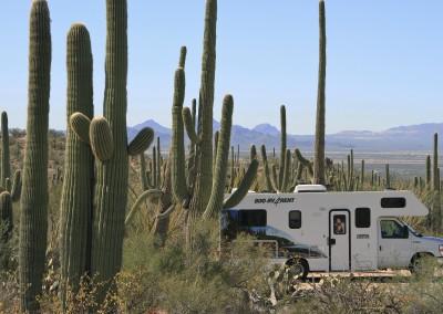 Saguaro NP, AZ-IMG_2513-7D